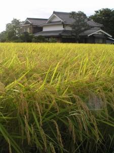 Photo By イネ - Wikipedia