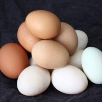 「たまご(卵/玉子)」 の由来