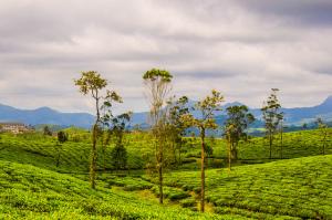 茶葉製作所